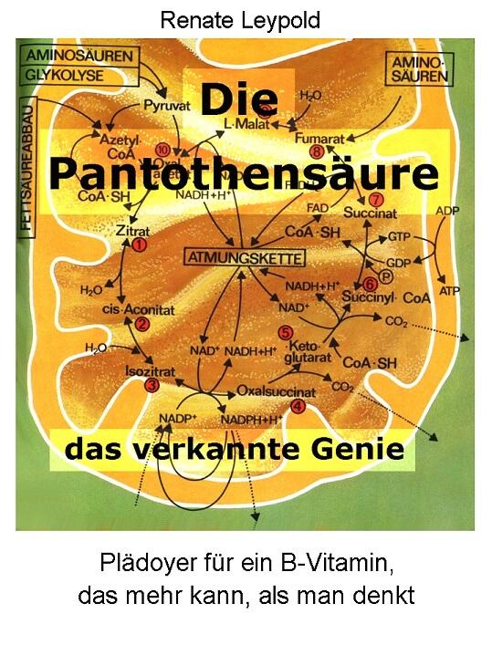 Die Pantothensaeure, das verkannte Genie