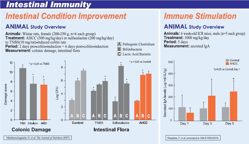 AHCC und Darmimmunität