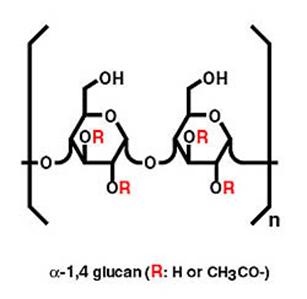 Alpha-1,4 Glukan: der effektive Bestandteil von AHCC