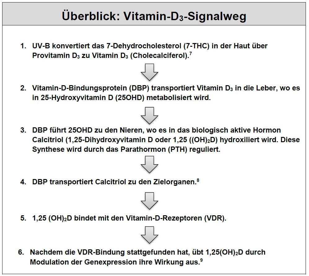 Vitamin-D-Signalweg