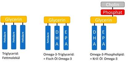 Der Unterschied zwischen Fischöl und Krillöl