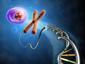 jedem Zellkern befinden sich 1,8 Meter DNA