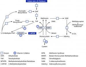 Abbildung 5: Schematische Darstellung des Folat- und Homocysteinstoffwechsels